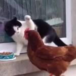 【動画】可愛い♪ニャンコVS○○動画を集めてみた!