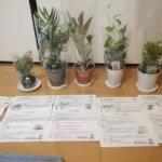 楽天で観葉植物の福袋を購入してみたらテーブルヤシやゴムの木がはいってました。