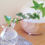 自宅でできる乾燥対策!簡単な加湿方法