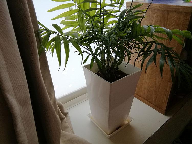 金欠な人必見!観葉植物とあるものだけを使って金運アップする方法!